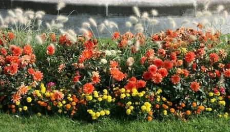 Многолетние цветы для сада и рокария