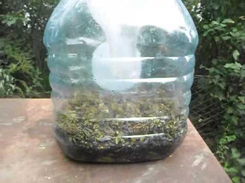 Эффективные методы борьбы с осами на пасеке