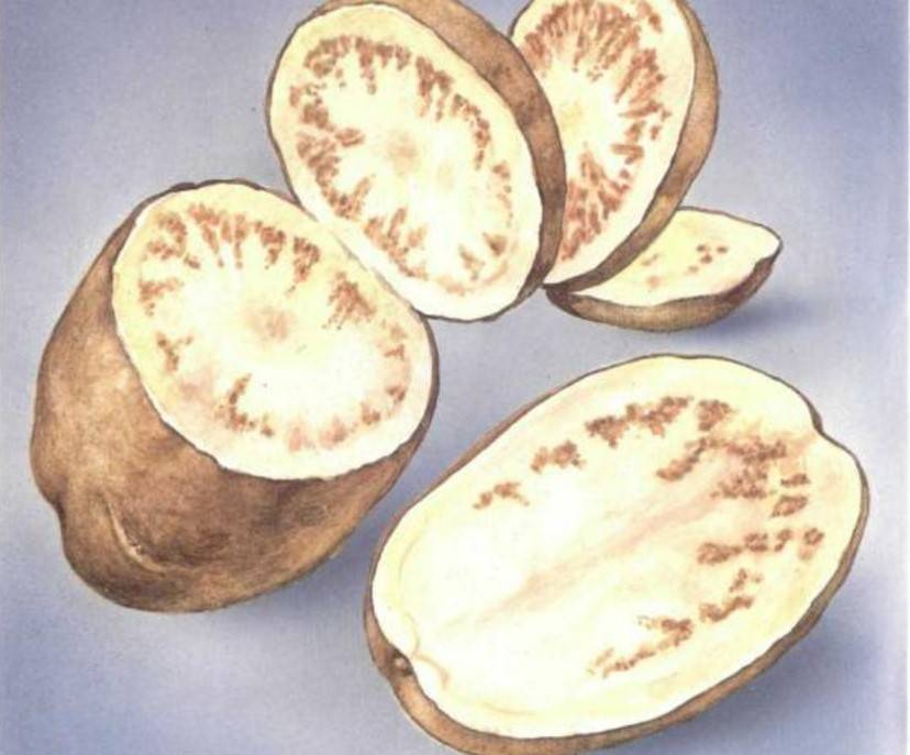 Вирусные болезни картофеля и борьба с ними