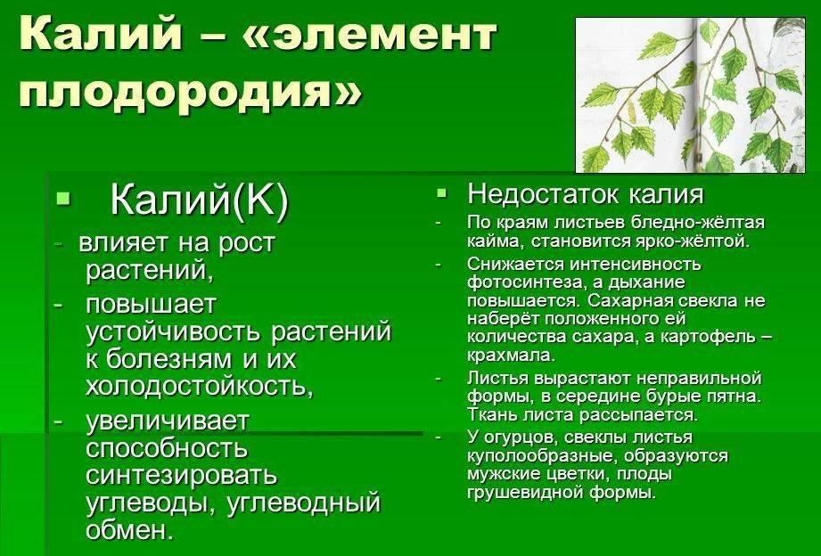 Подкормка помидор в период плодоношения и цветения: чем и как удобрять