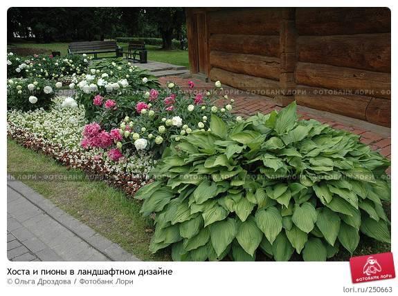 Использование гладиолусов в ландшафтном дизайне — освещаем вопрос