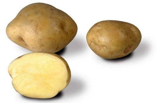 Лучшие сорта картофеля для средней полосы