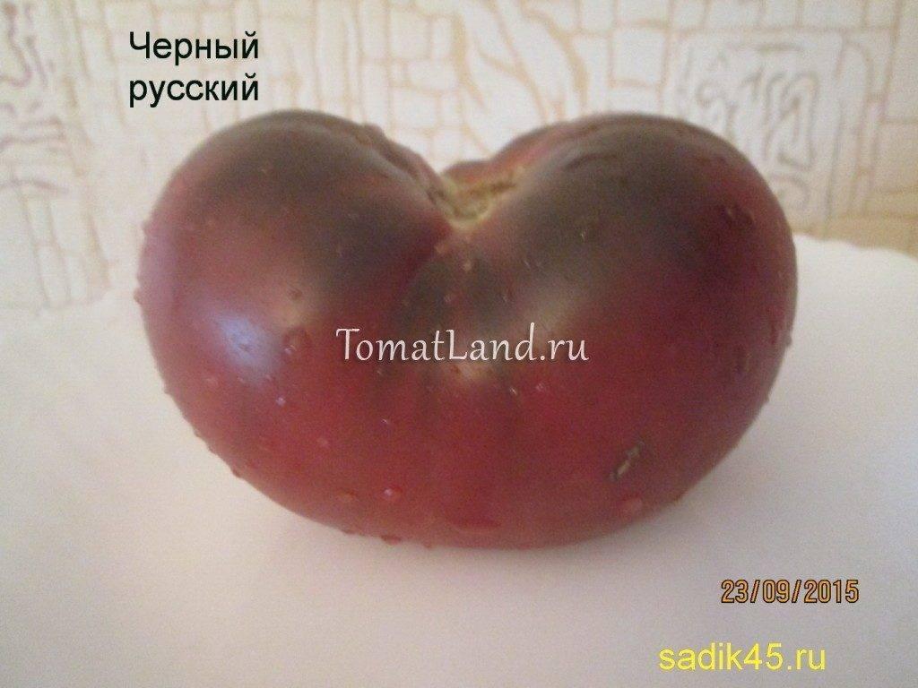 Описание томатов сорта «бизон»: отличия разновидностей черного, желтого, оранжевого и черного цветов