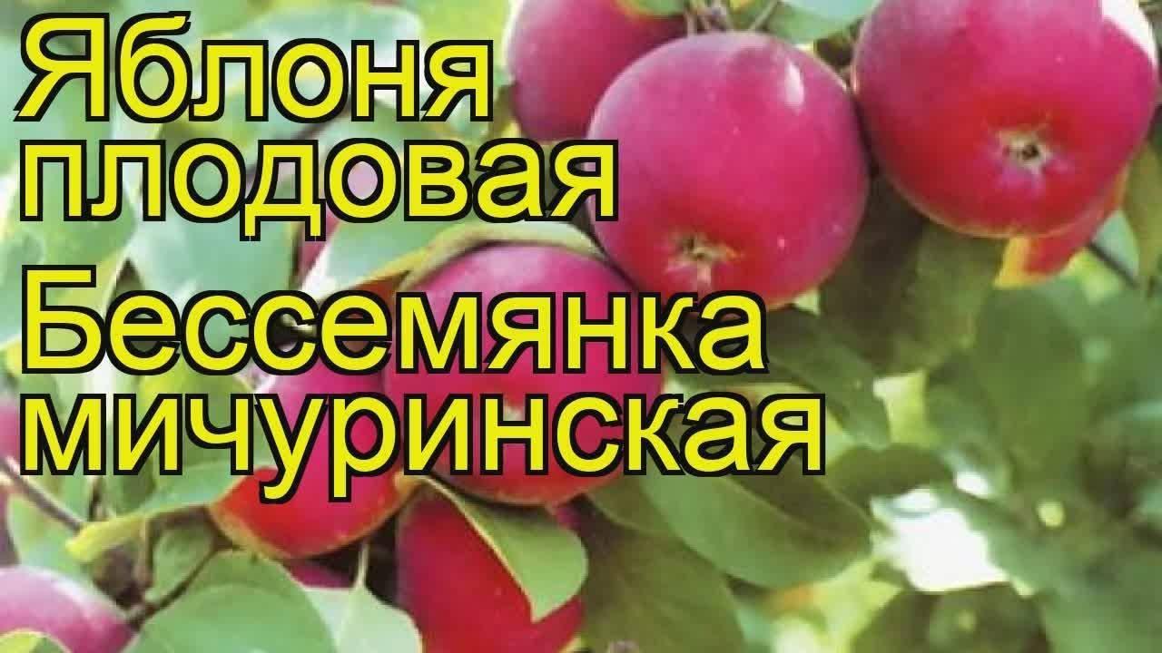 Урожайная яблоня бессемянка мичуринская