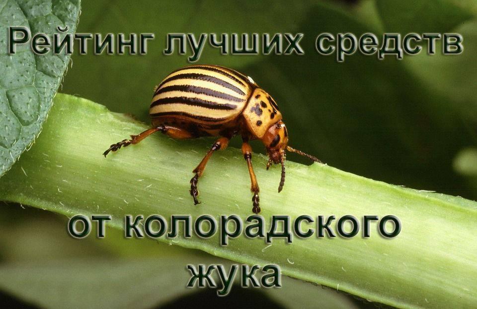 Командор от колорадского жука: инструкция по применению, отзывы