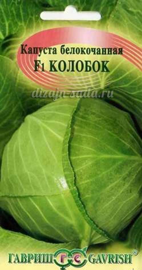Описание сорта капусты колобок