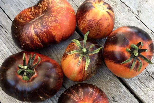 Описание сорта томата сахарные пальчики, его характеристика и урожайность