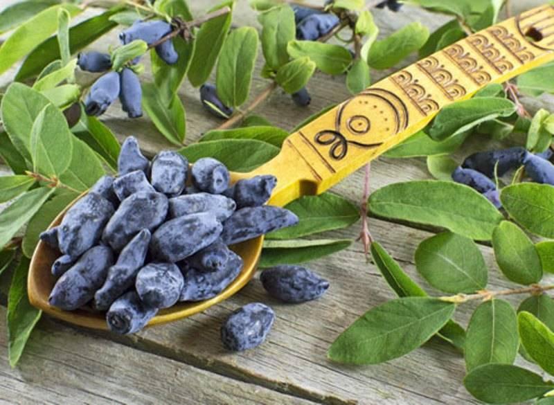5 сортов садовой жимолости, сочные ягоды которой точно не будут горчить
