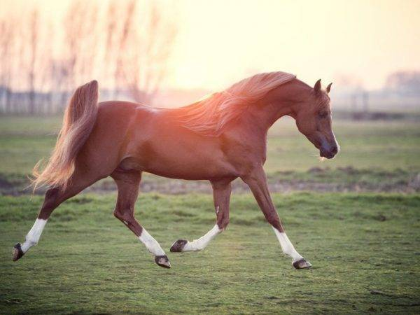 Терская порода лошадей: история, описание экстерьера, содержание