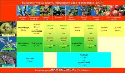 Чем обработать грушу осенью от болезней и вредителей. календарь садового опрыскивания груши