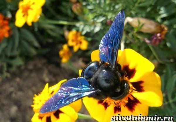 Пчелы-плотники завелись в доме. как избавиться?