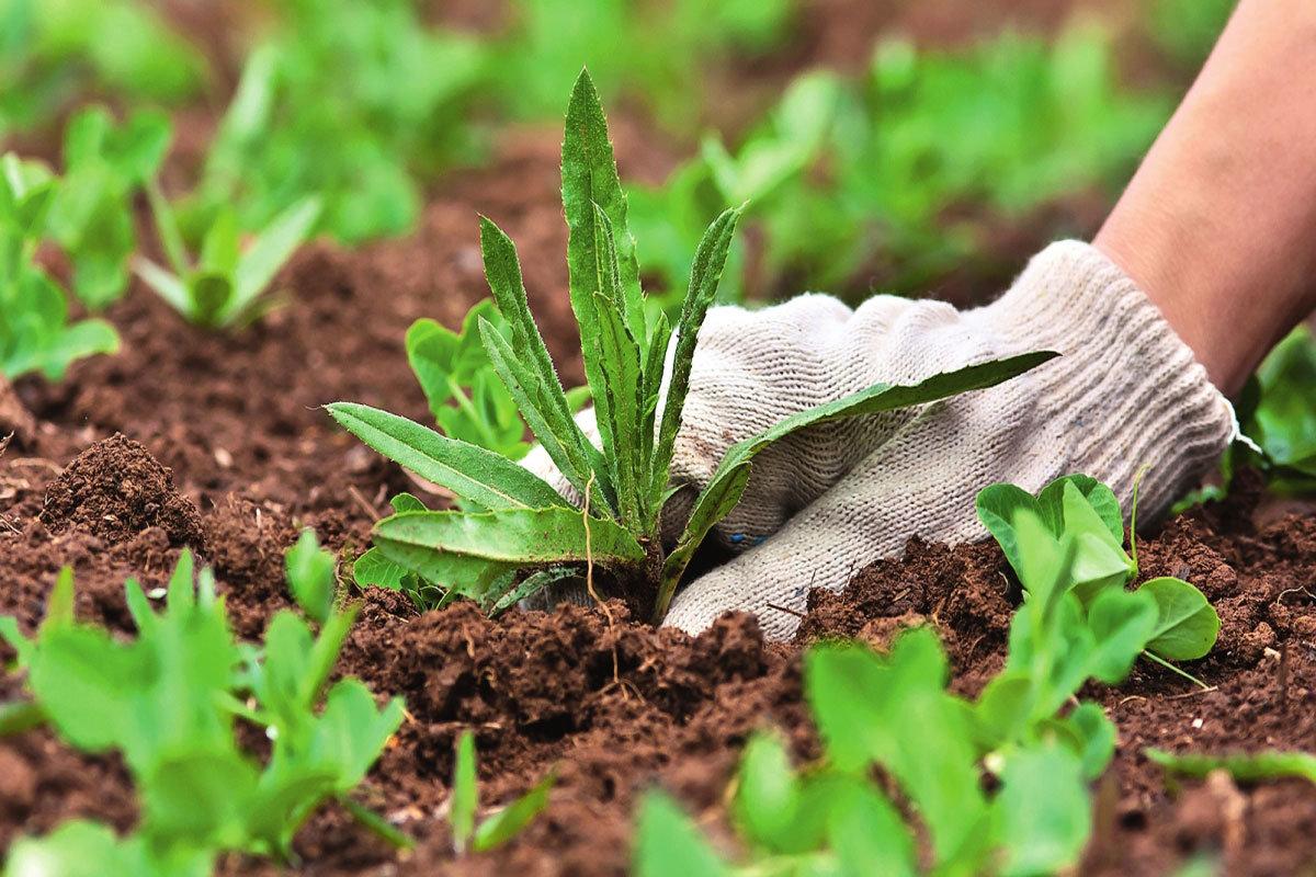 Как избавиться от сорняков и травы навсегда: народные средства, видео