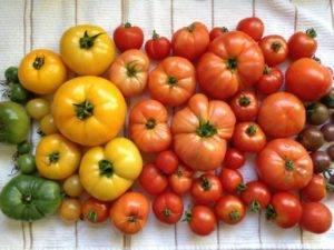 Где и как хранить зеленые помидоры чтобы они покраснели как можно быстрее и как сохранить надолго спелые плоды