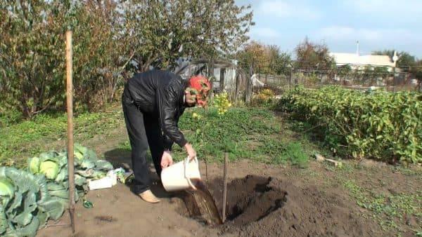 Особенности посадки вишни осенью