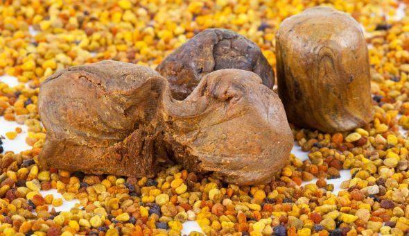 Народная медицина: как и для чего жуют прополис?
