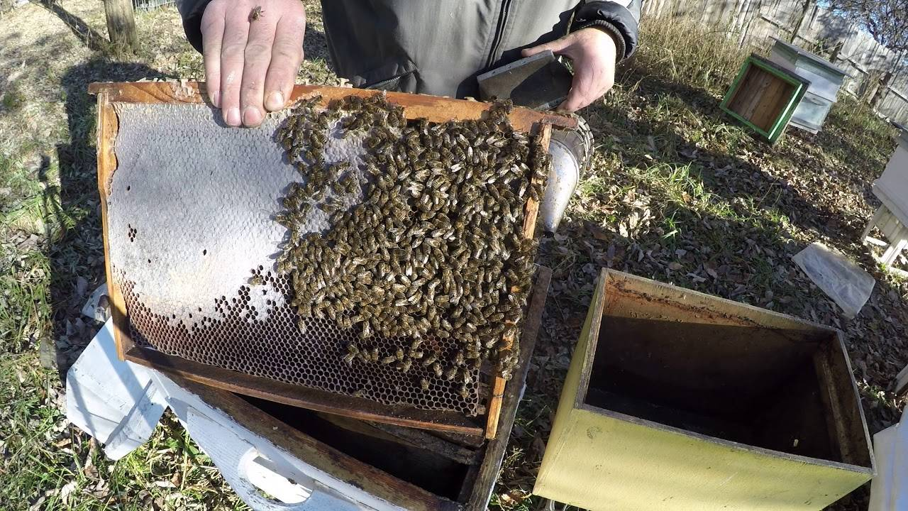 Сколько меда дает один улей за сезон, какое количество меда приносит одна пчела