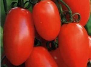 Томат персик: характеристика и описание индетерминантного сорта с фото