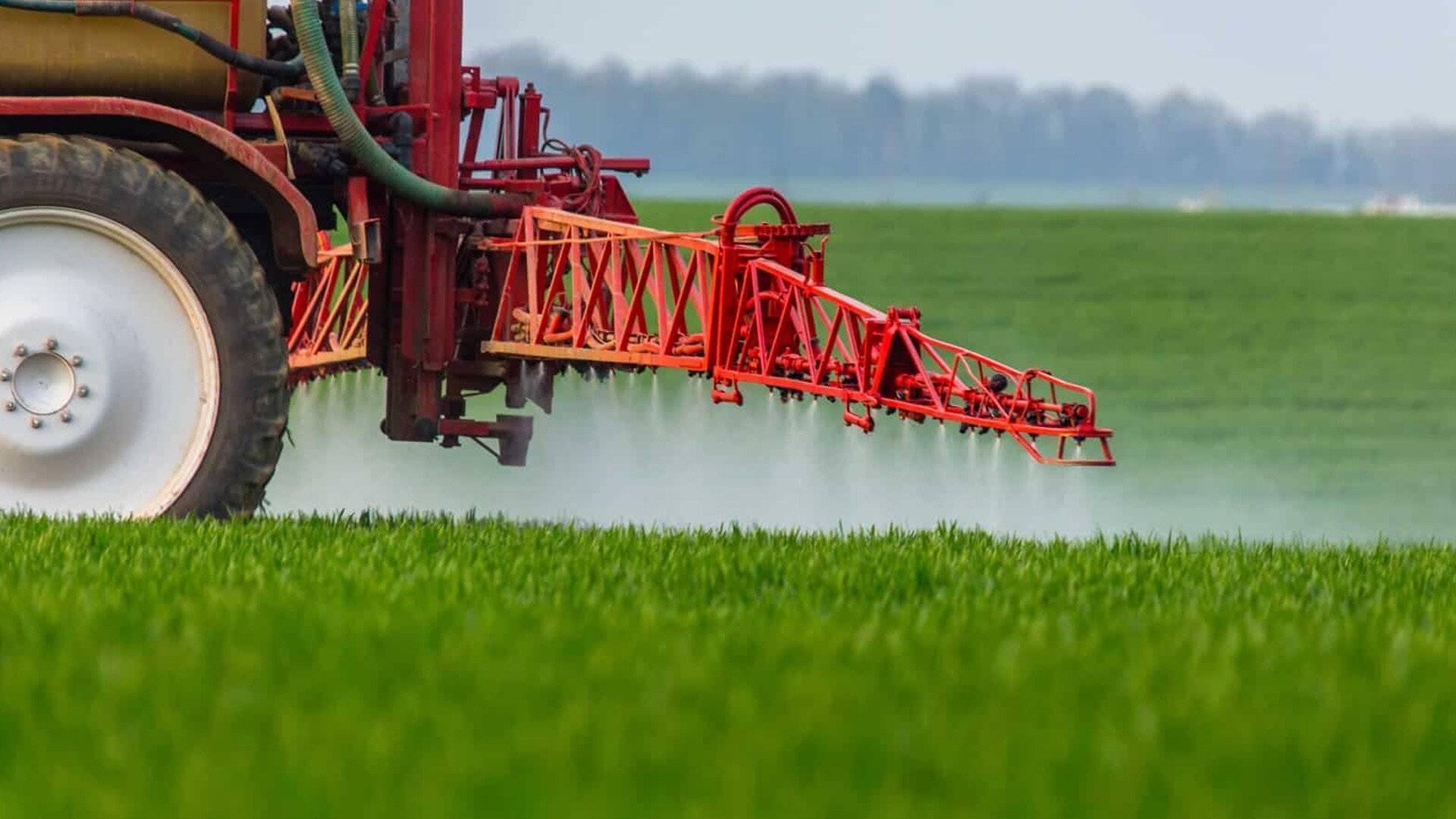 Гербицид для кукурузы: выбор и применение