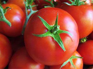 Сорт помидора «никола»: фото, отзывы, описание, характеристика, урожайность