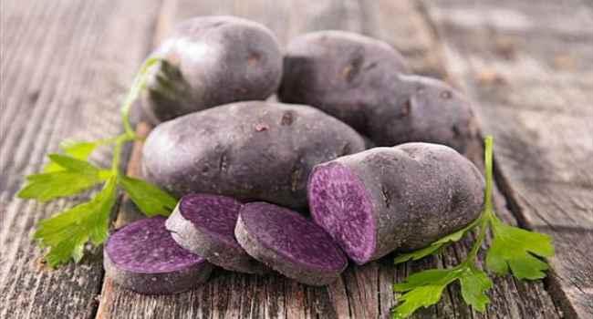 Картофель гурман: отзывы, описание сорта, правила выращивания