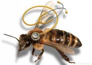 Как лечить понос у пчел