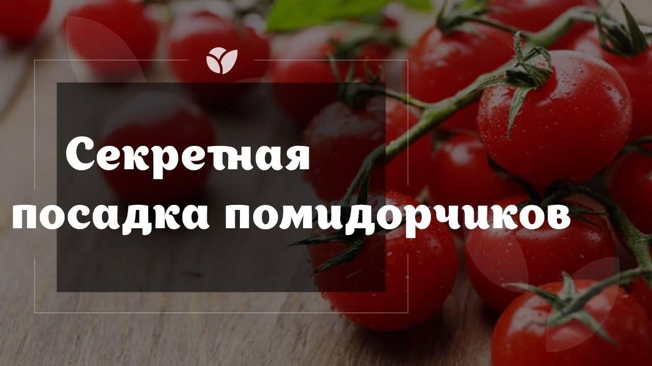Томат сибирский козырь: характеристика и описание, сорта