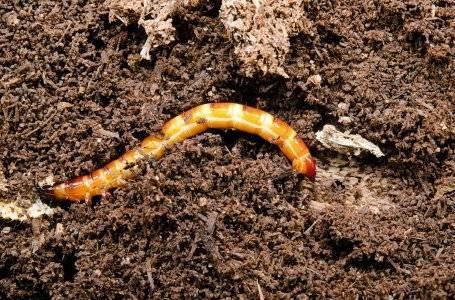 Дынные мухи: способы борьбы