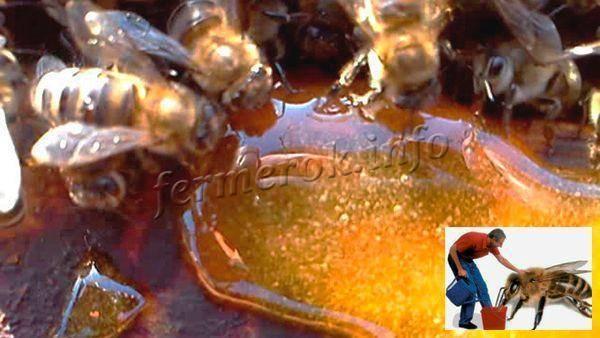 Как подкормить пчел зимой сахарным сиропом, когда начинать подкормку пчел на зиму