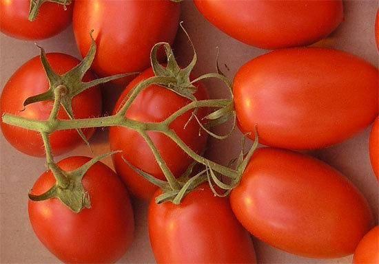 Описание и особенности выращивания томатов сорта рома