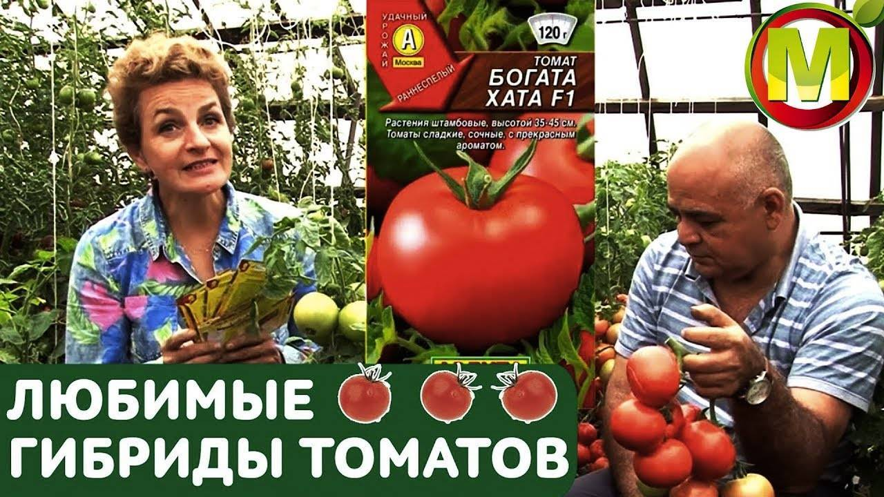 Томат богата хата: фото и описание, урожайность сорта, отзывы
