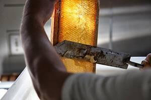 Распечатывание сотов на пасеке. обзор резаков для распечатки сотов и самостоятельное изготовление парового ножа паровой нож из морозилки