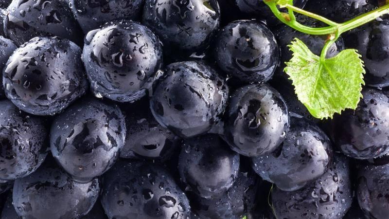 Чёрная смородина ядрёная: выращиваем гигантские ягоды в саду