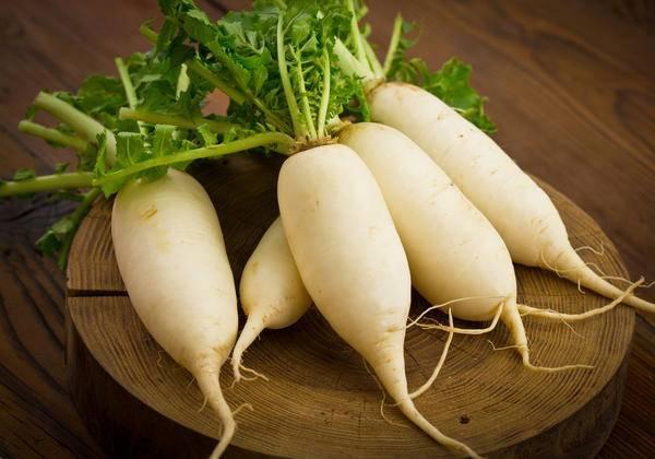 Китайская, или маргеланская редька: польза и вред, лечебные свойства и народные рецепты