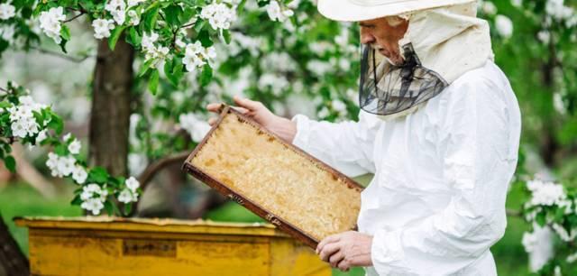 Рой пчел: как поймать и чем приманить