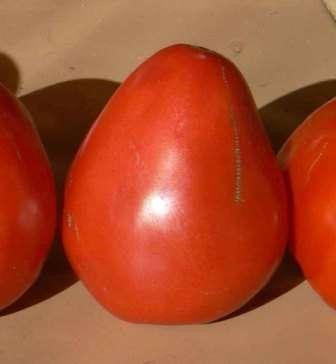 Характеристики сорта томатов буденовка и советы по выращиванию