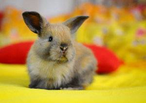 Карликовый кролик: породы, уход и содержание