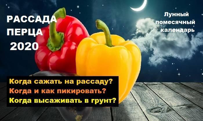 Выращивание крепкой рассады болгарского перца в домашних условиях