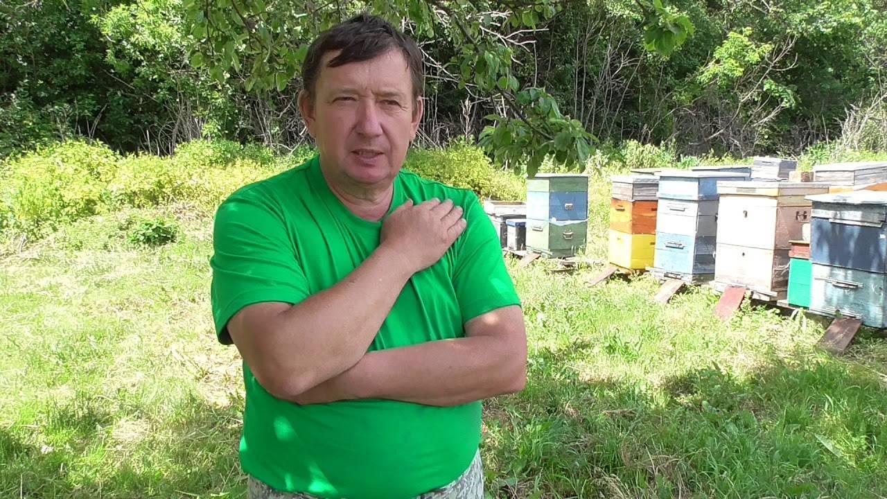 Лечение пчел от инфекционных заболеваний