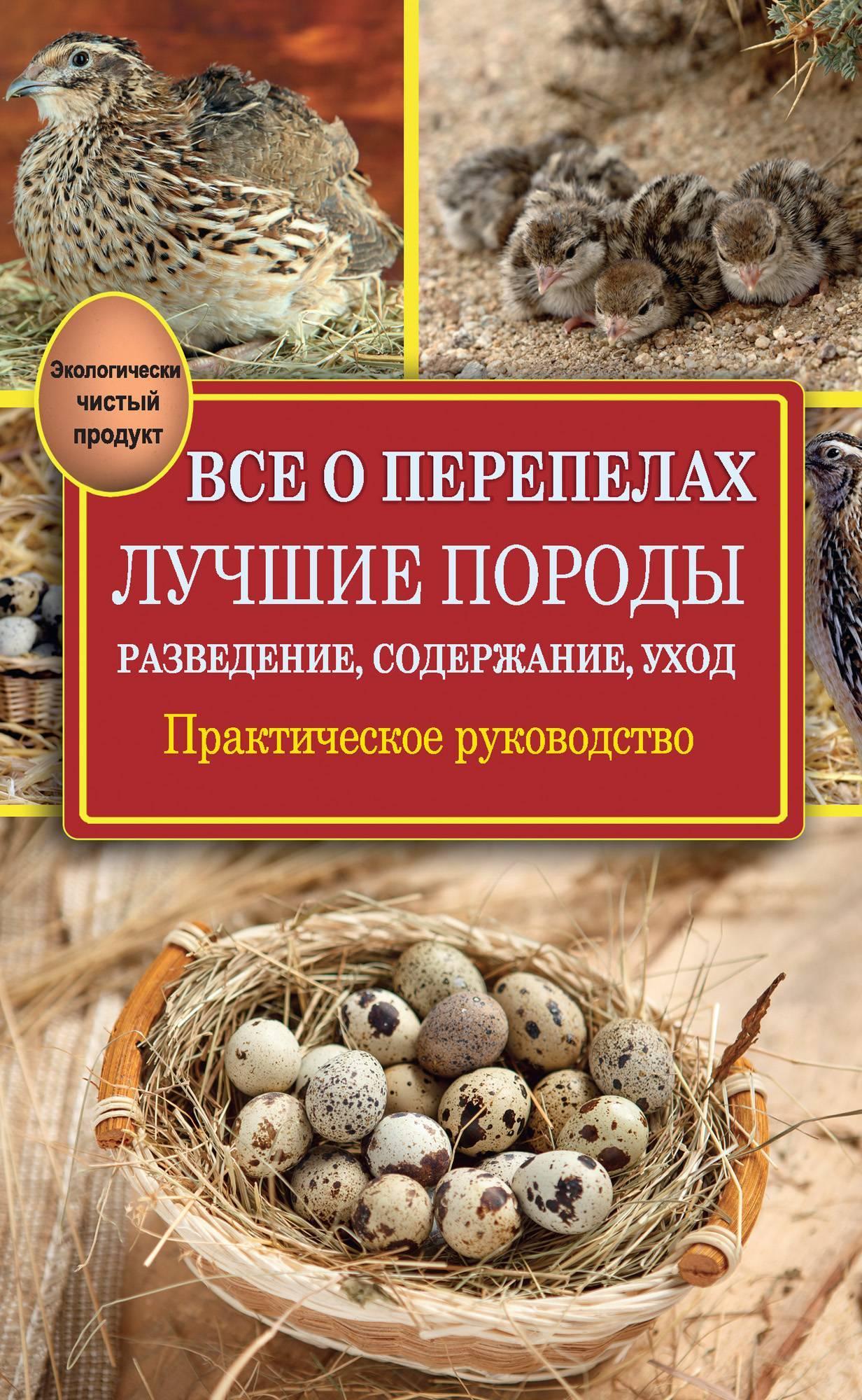 Маньчжурская порода перепелов: фото и описание