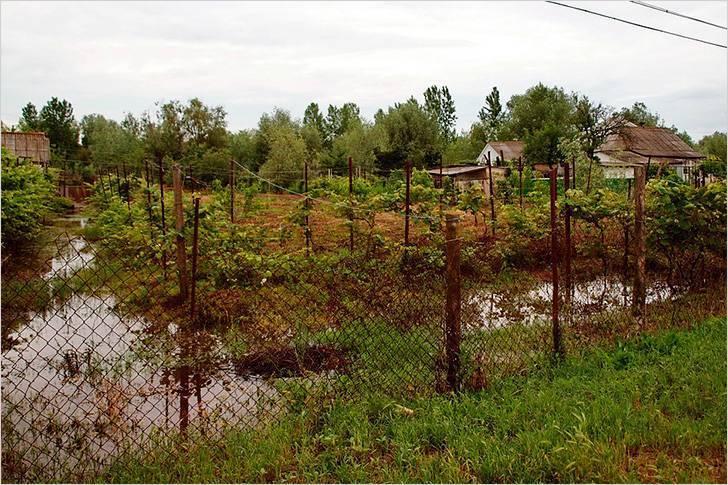 Дренаж участка: лучший способ защиты от ливневых и талых вод