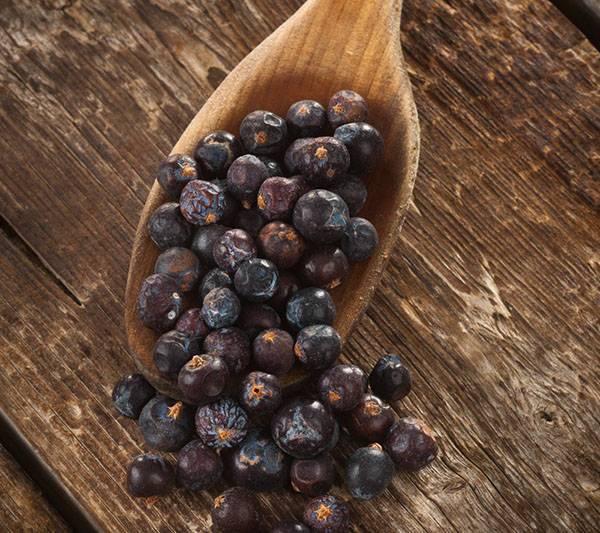 Ягоды можжевельника: от чего помогают, как использовать в лечебных целях