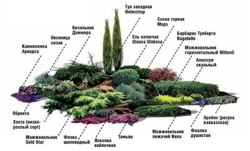 Хвойники в ландшафтном дизайне (89 фото): готовые композиции из хвойных и лиственных растений для дачного участка, красивые решения оформления голубой елью и хостами