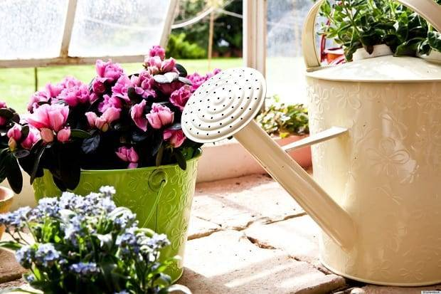 Удобрение сульфат магния: инструкция по применению, подкормка растений, комнатных цветов и хвойных
