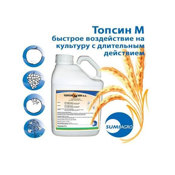 Фунгицид «топсин-м»: инструкция по применению против болезней полевых, плодовых культур, овощей и винограда