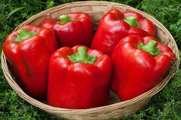 Калифорнийское чудо: один из самых известных сортов болгарского перца