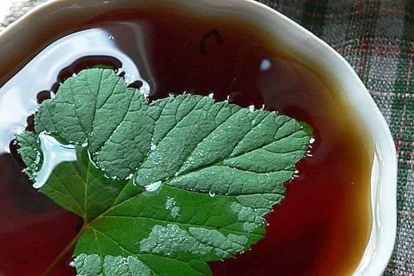 Как заготовить и правильно сохранить на зиму листья смородины для чая