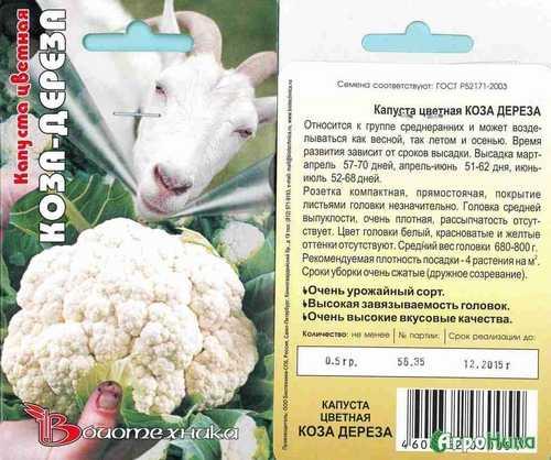 Цветная капуста коза-дереза — описание, способ высадки и ухода, реальные отзывы