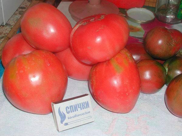 Описание и основные характеристики помидоров сорта севрюга
