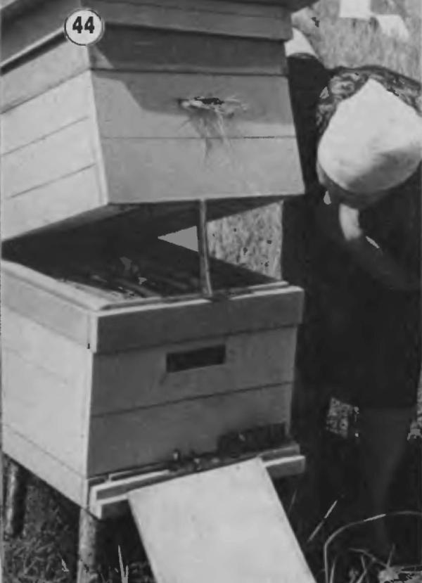 Содержание пчел в двухкорпусном улье на 12 рамок