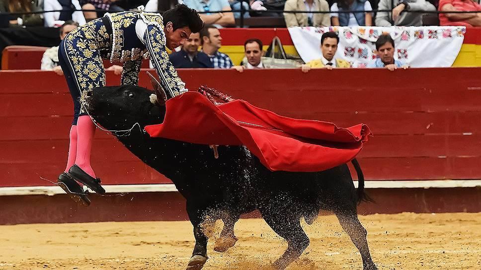 Как видят быки. различают ли быки цвета какие цвета видят быки